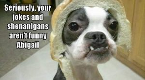 "Funny Animal Pictures Of The Day – 10 Images #funnydoghumor explore Pinterest""..."