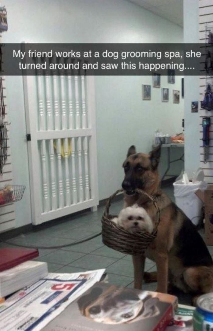 "150 Funny Animal Snapchats Pictures #funnydogpictures explore Pinterest""> #funnyd..."
