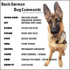 "21 German Dog Commands to Train your Dog #bestdogbreeds explore Pinterest""> #best..."