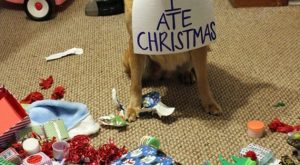Funny Dog Shaming Pictures (15 Pics) ………..click here to find out more