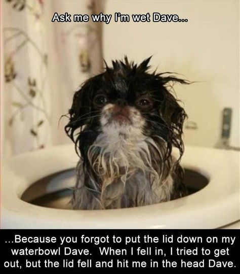 "Funny Animal Pictures Of The Day – 23 Images #funnydoghumor explore Pinterest""..."