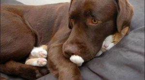 funny dog pictures with captions no i have not seen the cat #funnydogs explore…