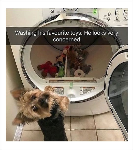 "They're mine, you know! #funnydogshaming explore Pinterest""> #funnydogshami..."