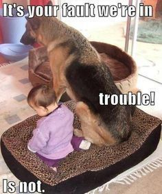Funny German Shepherd meme for dog lovers, click here to check out this hilarious…