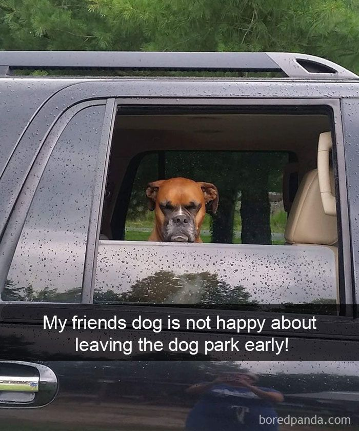 30+ Hilarious Dog Snapchats That Are Impawsible Not To Laugh At (Part 4) #funnydoghilariou...