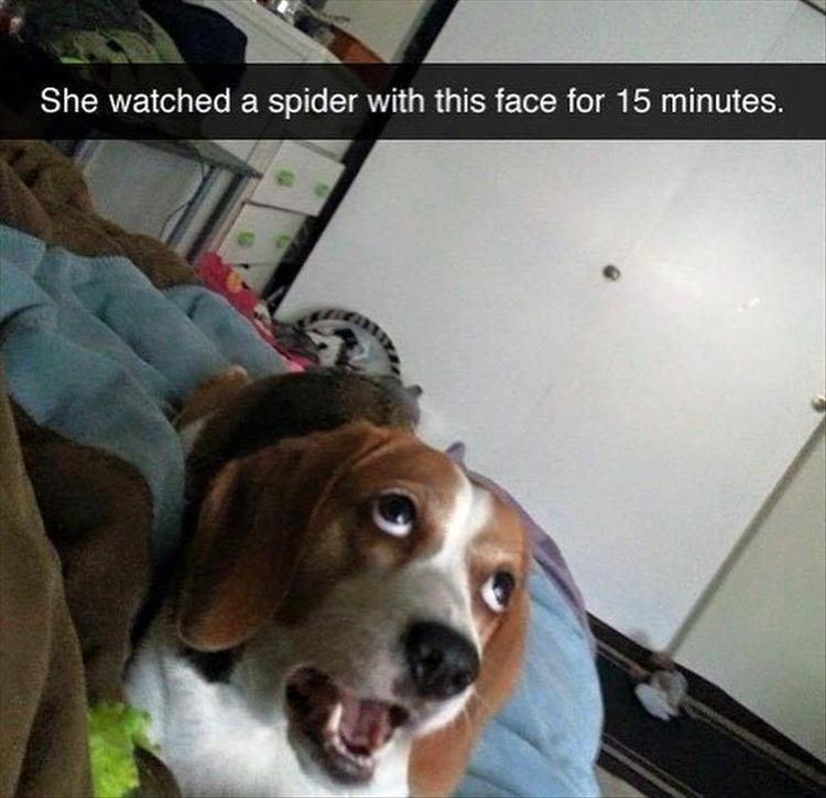 """Funny Animal Pictures Of The Day – 23 Pics #funnydogvideos explore Pinterest""""> ..."""