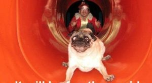 pug + slide = ridiculous I don't know what's funnier, the dog or the…