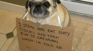 "Sad and Useless Humor Blog #funnydogshaming explore Pinterest""> #funnydogshaming"