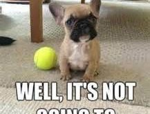 "funny dog pictures with captions – Bing Images #Dogs explore Pinterest""> #D..."