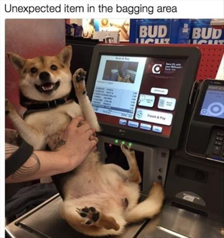"""Funny Animal Picture Dump Of The Day 27 Pics #funnydogs explore Pinterest""""> #funn..."""