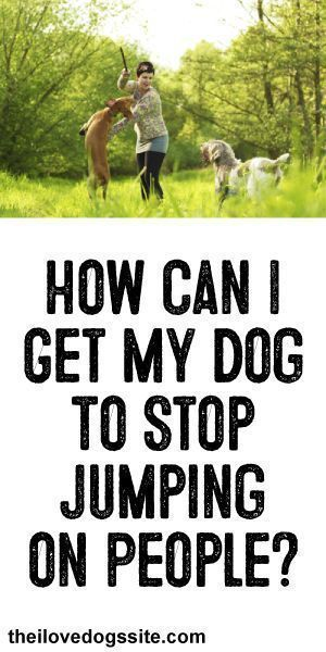 """How Can I get My Dog To Stop Jumping On People? #bestdogbreeds explore Pinterest""""&gt..."""