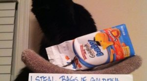 Cat-Shaming At Its Best – BuzzFeed Mobile
