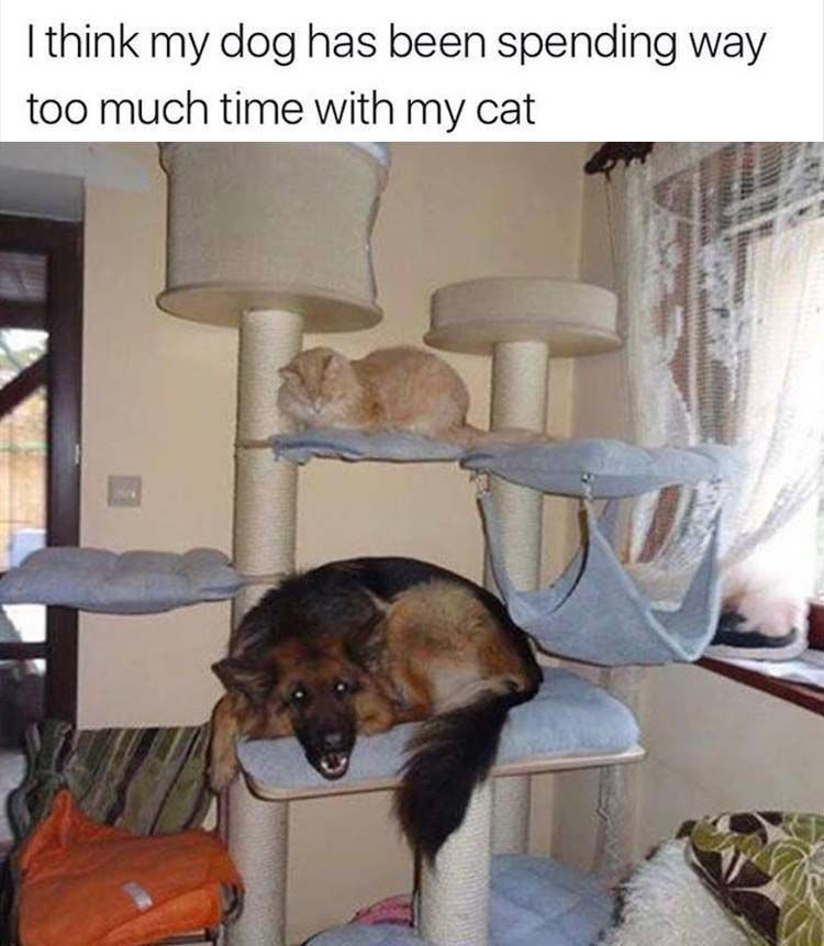 funny-animals-205 funny animal pictures pictures funny Animals #funnydogs explore Pinteres...