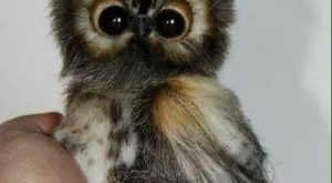 23 Picture of Little Cute Owl