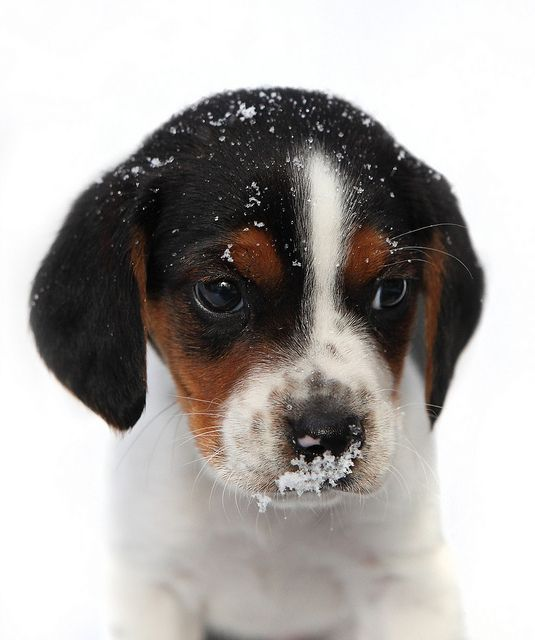 First winter for puppy