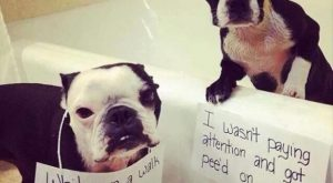 Dump+A+Day+Beware+Of+Funny+Animals+With+Captions+-+22+Pics #funnydogwithcaptions explore P...
