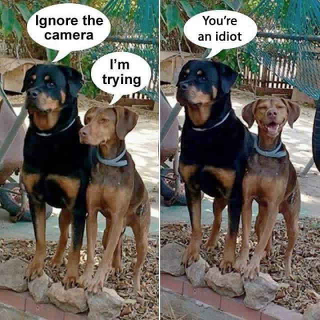 "Dog love #funnydoghilarious explore Pinterest""> #funnydoghilarious"