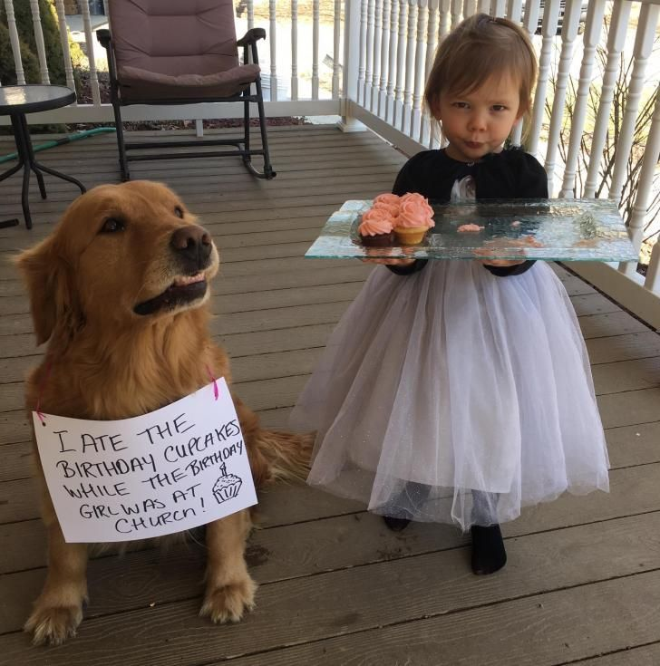 His face says he'd do it again in a heartbeat #funnydoghilarious explore Pinterest&#...
