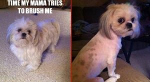 "Dog shaming – Google Search | Just DOGS! :) #funnydogshaming explore Pinterest""&gt..."