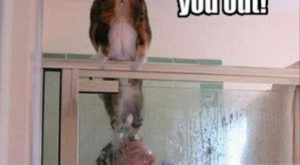 "funny animal pictures with captions #dogsfunnywithcaptions explore Pinterest""> #dogs..."