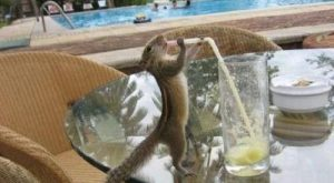 Funny Animal Pictures with Captions | Funny Animal Captions – Animal Capshunz: Make ...