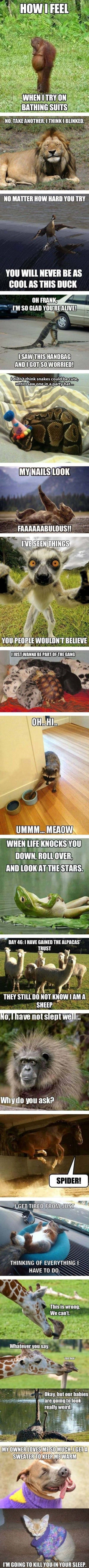 funny pictures with captions 222 (53 pict) Funny pictures #compartirvideos search Pinteres...