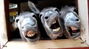 Four Funny Donkeys