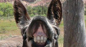 You Can't Handle My Fabulousness! Funny donkey face. :-)