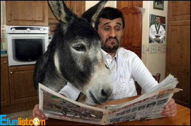 funny donkey pictures with captions | Funny-Donkey