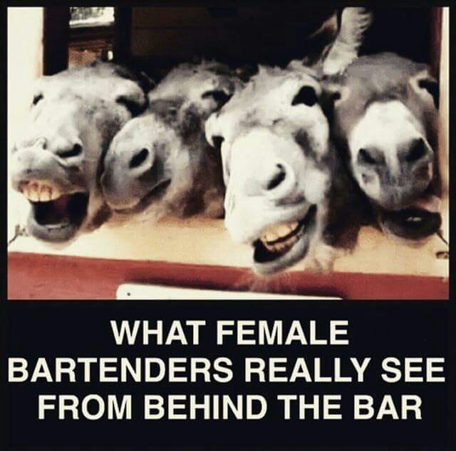Donkeys(ass) belly up to the bar
