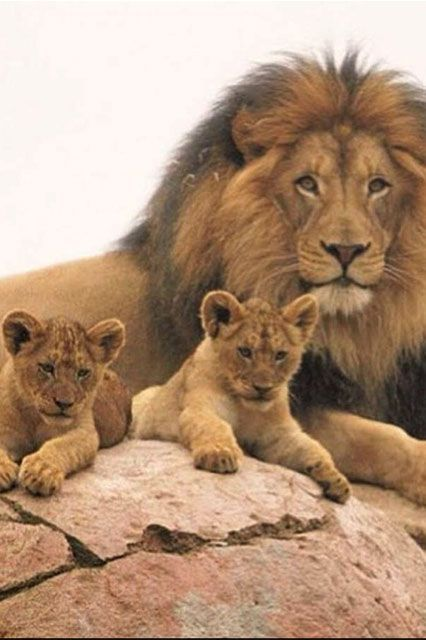 young wild animals | uldissprogis | Page 2