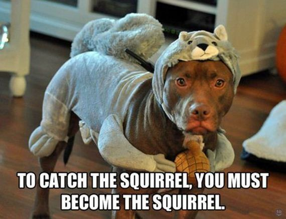 Funny Animal Pictures with Captions | Funny Photos with Captions | Barnorama #funnydogwith...