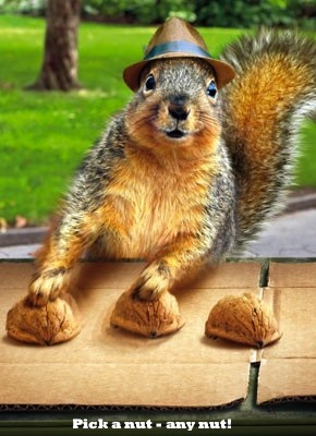 Cute funny squirrel photo. For the best cute animal photos with joke captions visit