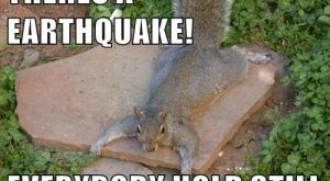 Funny Animal Pictures with Captions   can haz cheezburgerz? & #187; funny-animal-capt...