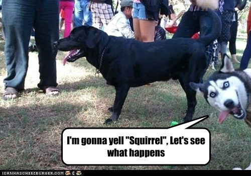 squirrels with captions – Google Search (photo bomb Derp HUSKY!!️™)