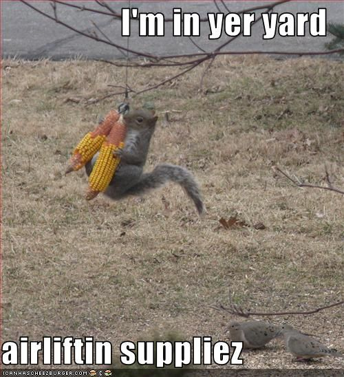 squirrels | Monday Morning Funny & #8211; Squirrels | Bytes From Babylon