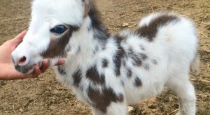 adorable mini donkey baby