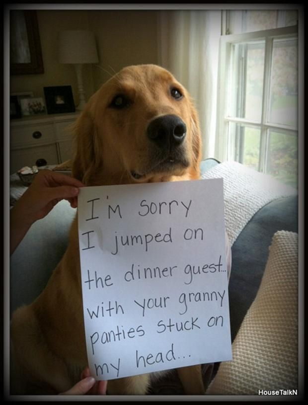 I'm sorry i jumped on the dinner guest with your granny panties stuck on…