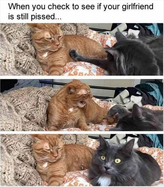 Funny Animal Pictures Of The Day – 22 Images