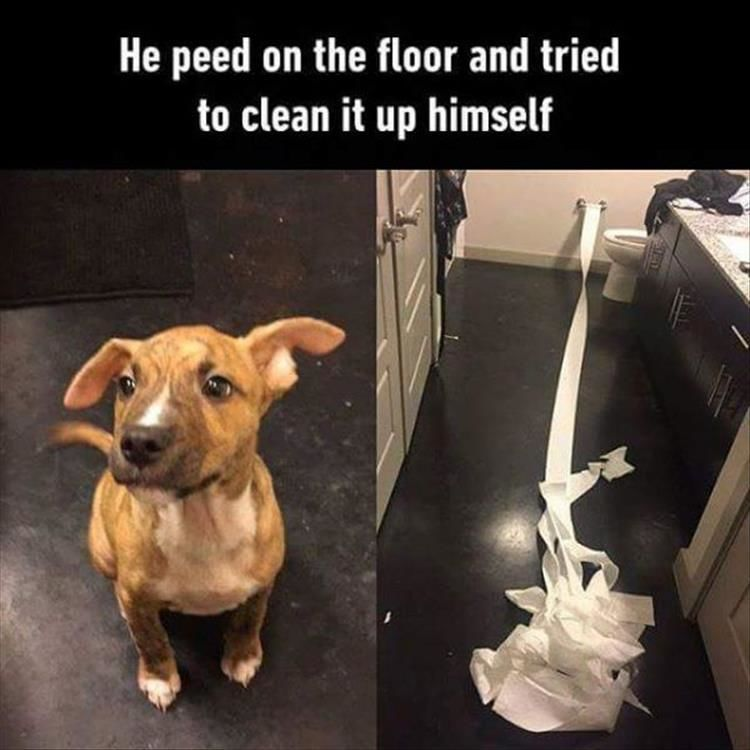 """Funny Animal Pictures Of The Day – 11 Images #DogLover explore Pinterest""""> #Do..."""