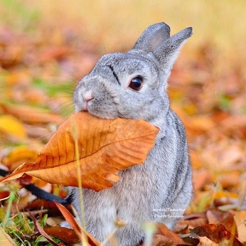 """""""Bunny Plans to Go All Vegan"""" — CUTE ANIMALS and the captions are hilari..."""