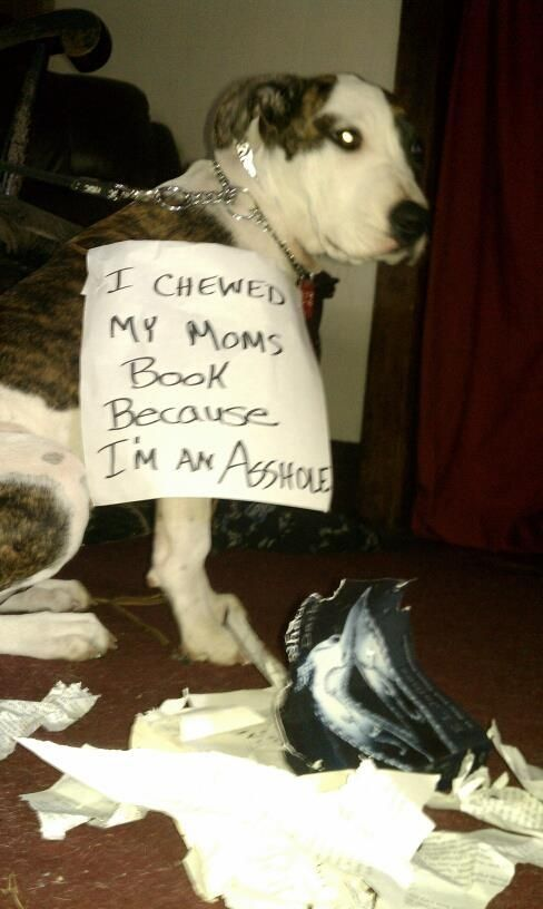 The best of dog shaming – Part 11 – Mommy Has A Potty MouthMommy…