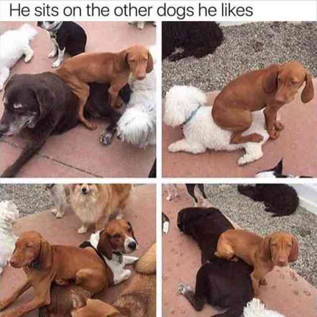"60 Funny Animal Pictures #funnydogvideos explore Pinterest""> #funnydogvideos"