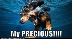 Funny Dachshund Pictures with Captions | … dachshund – Page 2 – Loldogs n…