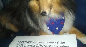 Best Case Of Dog Shaming
