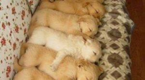 """Aww! Look at all the little puppies! – #puppies search Pinterest""""> #puppies..."""