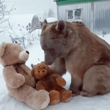 Bear and Teddy Bears