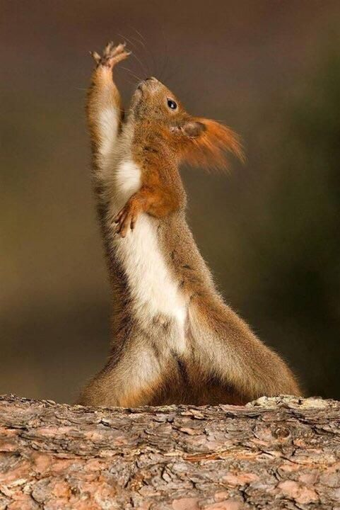 The worst part about being the first squirrel to figure out high fives? You…