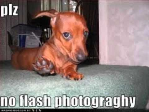 Tiny dachshund, I couldn't agree more. That's why I only use beautiful, natura...