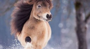 "21 Unbelievably Cute Animals #cuteanimals explore Pinterest""> #cuteanimals #babyanim..."